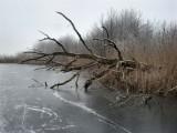 013 - Ankeveense plassen: We zijn hier op de wat grotere ijsvlaktes.