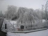 057 - Voordorpsedijk: uitgesneeuwde mist op de bomen