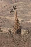 Tanzania, Safari - Oktober 2006 - 1031