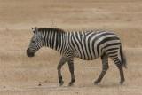 Tanzania, Safari - Oktober 2006 - 1038