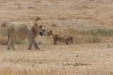 Tanzania, Safari - Oktober 2006 - 1049