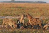 Zambia - 3 july 2010