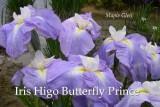 ButterflyPrince.jpg