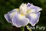 Sea Fury.jpg