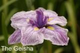 The Geisha.jpg
