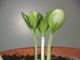 seedlings 006.jpg