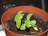 seedlings 009.jpg