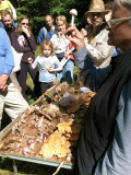 2012 COMA WALKS, PEOPLE, FUNGI and FORAYS
