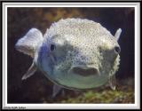 Aquarium - IMG_0773.jpg