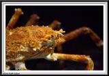 Aquarium - IMG_0964.jpg