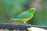 Brazil - Birds