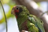 Cayman Island - Birds