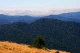4384 Big Basin State Park.jpg