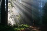 4678 Redwoods Sun rays.jpg