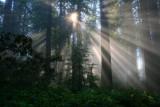 4718 Redwoods starburst.jpg