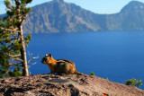 4894 Chipmunk Crater Lake.jpg