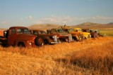 4989 Old Trucks in Oregon.jpg