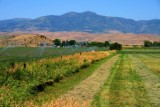 5023 Fields in Idaho.jpg