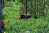 5314 Black Bear Signal Mtn.jpg
