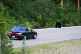 6721 Bear and car.jpg