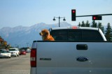 6752 Dog in Truck Jasper.jpg