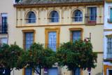 8037 Orange Trees Seville.jpg