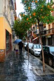 8044 Orange trees alleyway.jpg