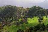 8379 Fields around Gaucin.jpg