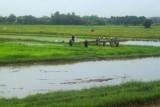 1182 Farm workers.jpg