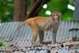 1440 Monkey on roof.jpg