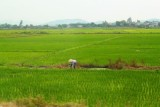 2470 Farmer in Field.jpg