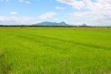 2956 Fields near Hoi An.jpg