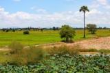 3724 Fields outside Phnom Penh.jpg