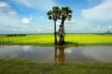 3858 Farmland mid Cambodia.jpg