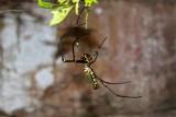 3987 Spider Bantay Kdei.jpg
