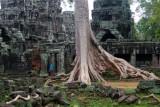 3998 Tree Bantay Kdei.jpg