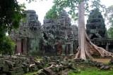 4002 Tree Bantay Kdei.jpg