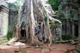 4055 Paul Tree roots.jpg