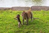 4212 Monkey and baby.jpg