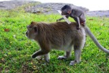 4223 Baby and monkey back.jpg