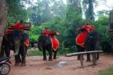 4394 Elephants at Angkor.jpg