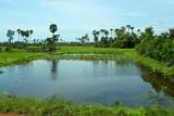 4452 Wetlands West Cambodia.jpg