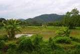 1383 Paddy fields and hills.jpg