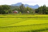 3011 Fields near My Son.jpg