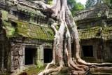 4025 Ta Prohm tree roots.jpg
