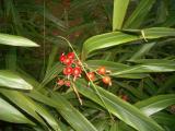 BerryFortCanning2006-02-15 019.JPG