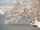 Snow finally arrived........