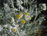 Alien Flower...........