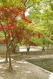Trees in the Secret Garden