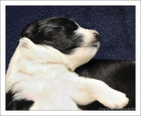 Bailey's Puppy